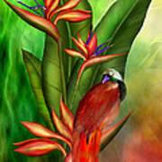 Birds Of Paradise Poster by Carol Cavalaris