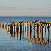 Birds On Old Dock On The Bay Poster by Michael Thomas