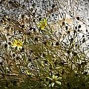 Black-eyed Susan On Rocks Poster by Patricia Keith