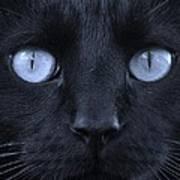 Blackie Blue Poster by Elizabeth Sullivan