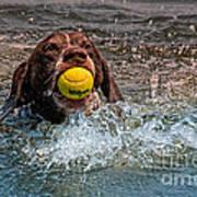 Blaze Retrieving Wilson 3 Poster by Joe Teceno
