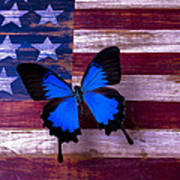 Blue Butterfly On American Flag Poster by Garry Gay