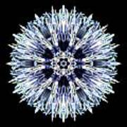 Blue Globe Thistle Flower Mandala Poster by David J Bookbinder