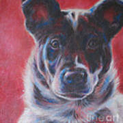 Blue Merle On Red Poster by Kimberly Santini