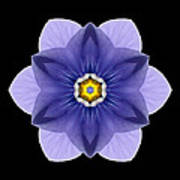 Blue Pansy I Flower Mandala Poster by David J Bookbinder