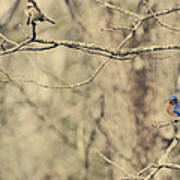 Bluebird And Sparrow Poster by Heather Applegate