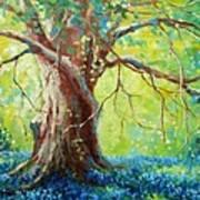 Bluebonnets Under The Oak Poster by David G Paul