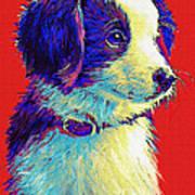 Border Collie Puppy Poster by Jane Schnetlage
