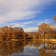 Bosque Del Apache Reflections Poster by Mike  Dawson