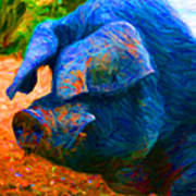 Boss Hog - 2013-0108 - Square Poster by Wingsdomain Art and Photography