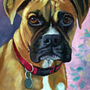 Boxer Dog Portrait Poster by Lyn Cook