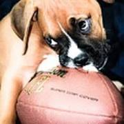 Boxer Puppy Cuteness Poster by Peggy  Franz