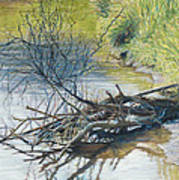 Branches By A River Bank Poster by Nick Payne