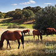 Breed Of Horses Poster by Carlos Caetano