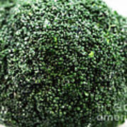 Broccoli Poster by John Rizzuto