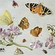 Butterflies Poster by Jan Van Kessel
