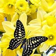 Butterfly Among The Daffodils Poster by Edward Fielding