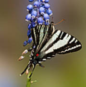 Butterfly Delight Poster by Lara Ellis