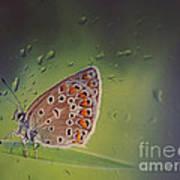 Butterfly Poster by Diana Kraleva