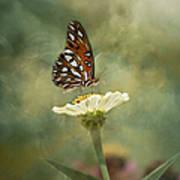Butterfly Dreams Poster by Kim Hojnacki