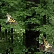 Butterfly Waltz Poster by Debra     Vatalaro