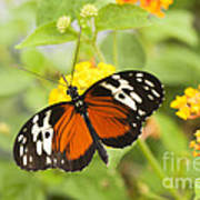 Butterfly Wings Poster by Anne Gilbert