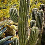 Cacti Habitat Poster by Kelley King