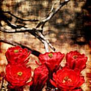 Cactus Flowers 2 Poster by Julie Lueders