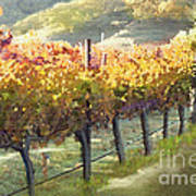 California Vineyard Series Morning In The Vineyard Poster by Artist and Photographer Laura Wrede