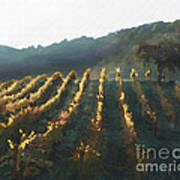 California Vineyard Series Wine Country Poster by Artist and Photographer Laura Wrede