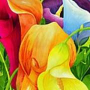 Calla Lily Rainbow Poster by Janis Grau