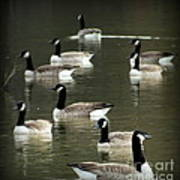 Calm Waters Poster by Karen Wiles