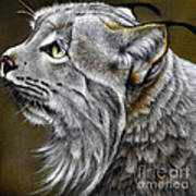 Canadian Lynx Poster by Jurek Zamoyski