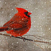 Cardinal In Snow Poster by Lois Bryan