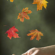 Catching Leaves Poster by Amanda Elwell