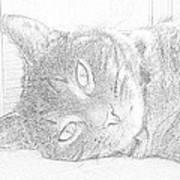 Cat's Eye Poster by J D Owen