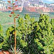 Century Plant - Sedona Poster by Steve Simon