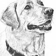 Charcoal Drawing Yellow Lab In Profile Poster by Kate Sumners