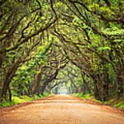 Charleston Sc Edisto Island - Botany Bay Road Poster by Dave Allen