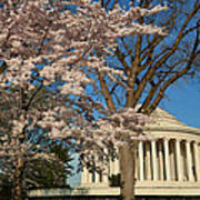 Cherry Blossoms 2013 - 048 Poster by Metro DC Photography