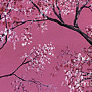 Cherry Blossoms  Poster by Darice Machel McGuire
