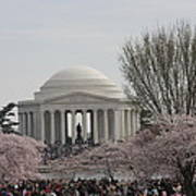 Cherry Blossoms With Jefferson Memorial - Washington Dc - 01132 Poster by DC Photographer