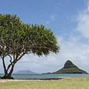 Chinamans Hat With Tree - Oahu Hawaii Poster by Brian Harig
