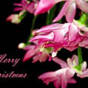 Christmas Cactus Greeting Card Poster by Carolyn Marshall