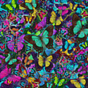 Cloured Butterfly Explosion Poster by Alixandra Mullins