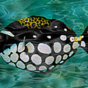 Clown Triggerfish Poster by Jack Zulli