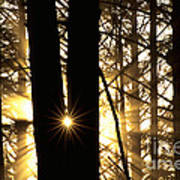 Coastal Forest Poster by Art Wolfe