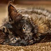 Coco Kitten Poster by Trever Miller