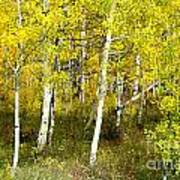 Colorado Autumn Poster by Baywest Imaging