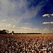 Cotton Field Poster by Scott Pellegrin